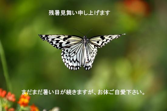 IMG_1580No4.jpg